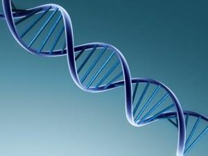 DNA_bruce_lipton_genetica_psicologia