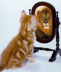 gattino-allo-specchio